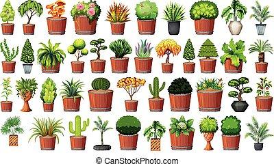 plante, ensemble, pot