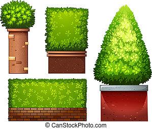 plante, ensemble, vert