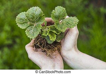 plante, femme, jeune, tenue, mains
