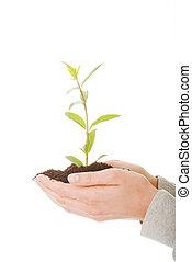 plante, femme, main, terre