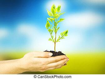 plante, femme, mains