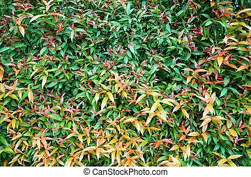 plante, feuille, coloré, nature, mur, feuilles, texture, arrière-plan., vert jaune, résumé, rouges