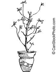 plante, fleur, croquis, salle, pot