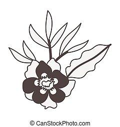 plante, fleur, heliconia, exotique, exotique