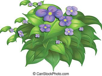 plante, fleur