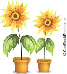 plante, fleurir pot