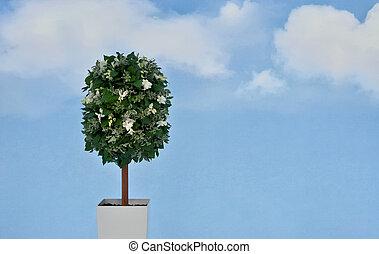 plante, fond, ciel, fleurs blanches, bleu, pot