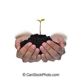 plante, fond, jeune, isolé, vert, tenue, mains, blanc