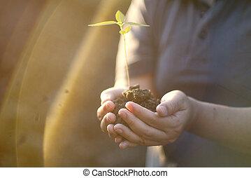 plante, fond,  nature, main, vert, tenue, croissant