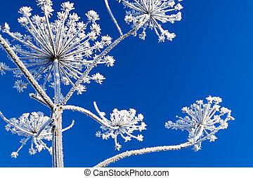 plante, fond, neige, bleu ciel, couvert