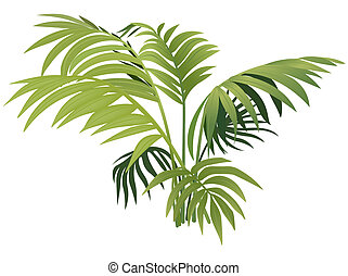 plante, fougère