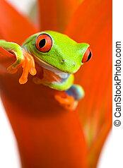 plante, grenouille, refroidir
