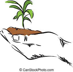 plante, hånd, illustration, hængende