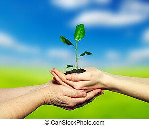 plante, hænder