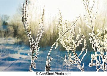 plante, hiver, résumé, snow., arrière-plan., barbouillage, couvert