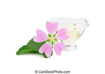 plante, huile, officinalis, verre, aromate, container., isolé, marshmallow., essentiel, aussi, althaea, marsh-mallow, marais, arrière-plan., mauve, médicinal, blanc, ou, commun