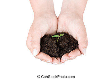 plante, humain, tenue, mains