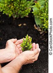 plante,  image, gros plan, nouveau, vert, tenue, mains, vie,  mâle