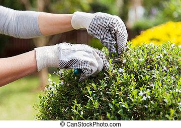 plante, jardinier, émondage