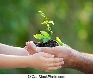 plante, jeune, contre, arrière-plan vert, mains