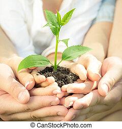 plante, jeune, mains