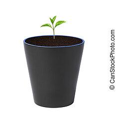plante, jeune, pot
