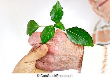 plante, jeune, vert, tenant mains, personne agee