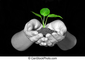 plante, mains