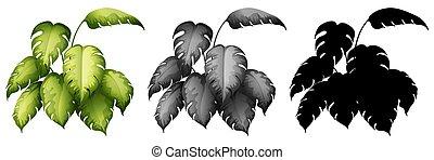 plante, mettez stylique