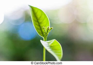 plante, naturel, contre, brouillé, arrière-plan vert, croissant