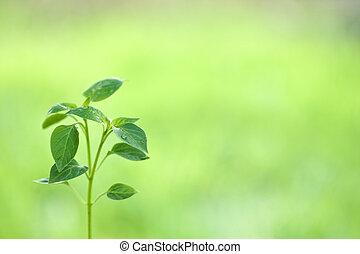 plante, naturel, jeune, contre, arrière-plan vert