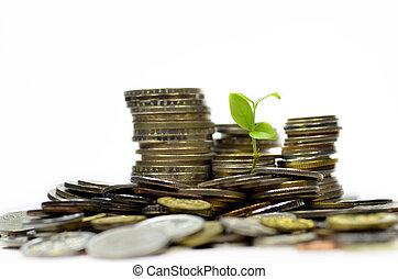 plante, og, grund, i, mønter