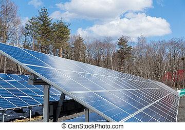 plante, panneau solaire