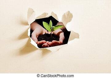 plante, papier, trou, mains