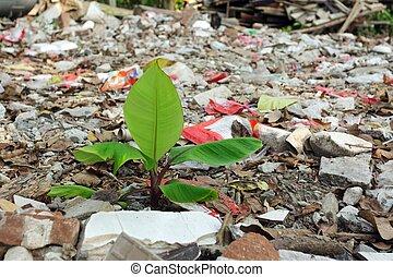 plante, pollution