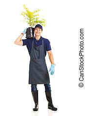 plante, porter, mâle, jardinier