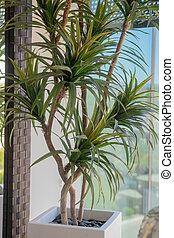 plante, pot céramique, intérieur, moderne, exotique, élégant, blanc