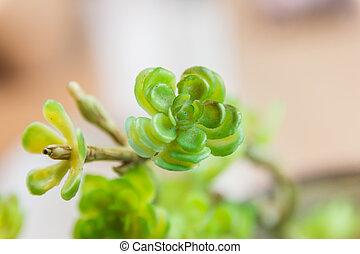 plante, sélectif, pot, peu, foyer, bois