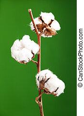 plante, sur, isolé, arrière-plan vert, coton