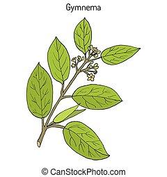 plante, sylvestre, gurmari, gymnema, cowplant, médicinal, ou