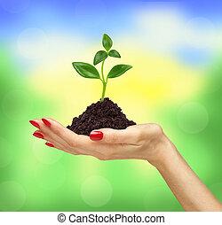 plante, tenue,  nature, sur, femme, main, fond, croissant, dehors, terrestre