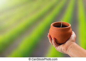 plante, tenue,  nature, sur, jeune, main, fond, enfant,  potted