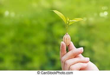 plante, tenue,  nature, texte, mains, fond, vert, humain, vide, croissant, graine