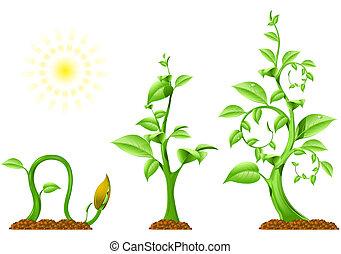 plante, tilvækst