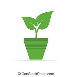 plante, vecteur, pot, illustration, icône