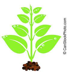 plante, vert