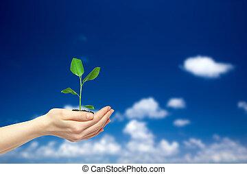 plante, vert, tenue, mains