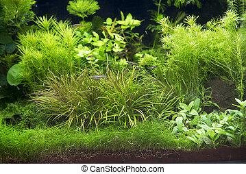 exotique eau douce aquarium beau disque fish exotique image recherchez photos. Black Bedroom Furniture Sets. Home Design Ideas