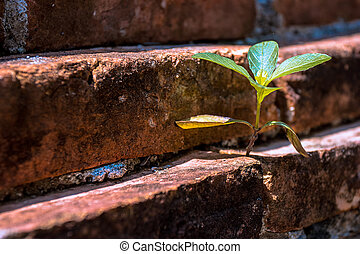 plante, vieux, niche, basé, brique, peu