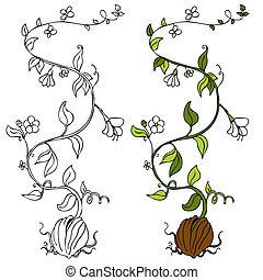 plante, vigne